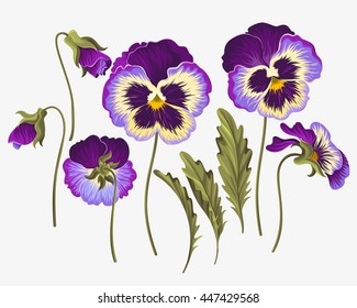 Pansy Flower Vector Images Stock Photos Vectors Shutterstock