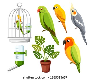 Set of parrots. Cage with birds, water drinker and flower pot. Cartoon style icons. Flat vector illustration isolated on white background.