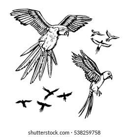 set of parrots. sketch illustration