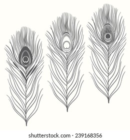 Set of peacock feathers  isolated on white background. Hand drawn vector illustration, sketch. Elements for design.