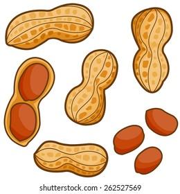 Set of peanuts on white background. Vector illustration