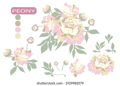 Set of peony flowers with buds and leaves. Plant elements for design. Botanical vector illustration.