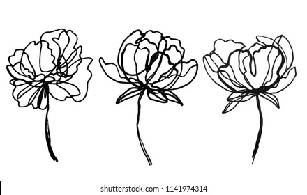 set of peony flowers drawings. abstract flower illustration. hand drawn vector art.