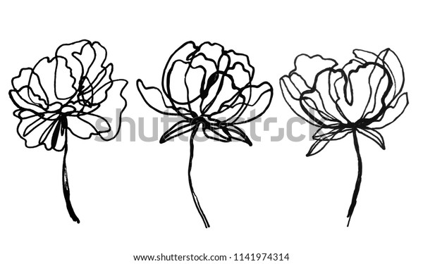 Set Peony Flowers Drawings Abstract Flower Stock Vector