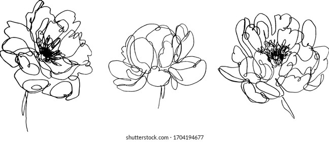set of peony flowers illustration. hand drawn continuous line drawing of abstract flower. peony icon.