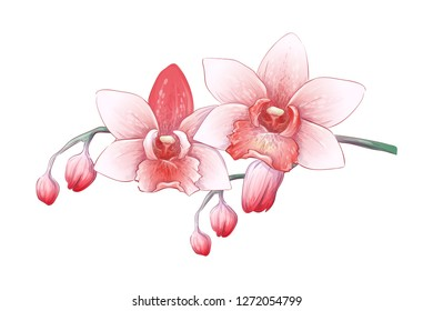Set Phalaenopsis orchid, pink, red flowers on white background, digital draw tropical plant