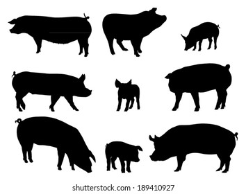 Set of Pig Silhouettes. Vector Image
