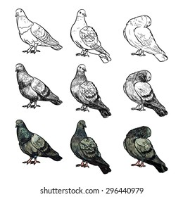 Set of pigeons on three pose and styles on white