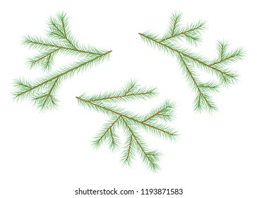 Set of pine branches. Decor element for invitations, print, poster, card, banner. Isolated on white background.