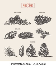 Set of pine cones, design elements, hand drawn vector illustration, sketch