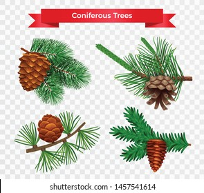Set with pine tree cone isolated images on transparent background with different species and ribbon title vector illustration