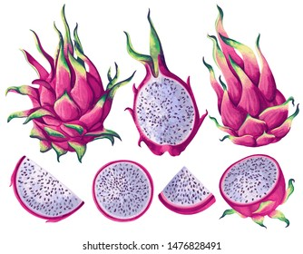 Set of pink dragon fruits (Pitaya) elements. Whole fruit, half and pieces. Vector illustration, realistic style. Exotic elements for summer background, patterns, wallpapers, fabric, wrapping paper.