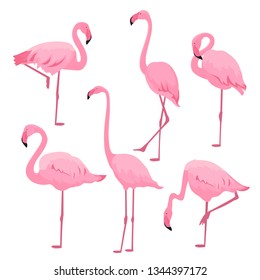 A set of pink flamingos in various poses