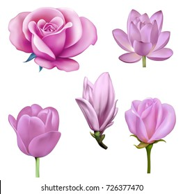 Set of pink flowers: blue tulip, lily lotus, rose flower, magnolia bud and pink tulip Isolated on white background. illustration of lotus lily flower,