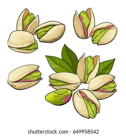 Set of pistachio nuts, single and grouped, sketch style vector illustration isolated on white background. Realistic hand drawing of pistachio nuts, single, pair, groups of three and four