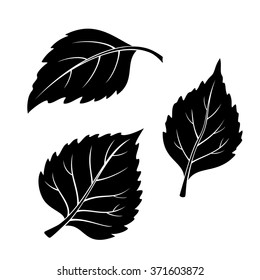 Set of Plant Pictograms, Birch Tree Leaves, Black on White. Vector