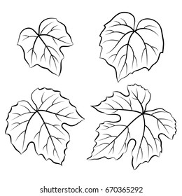 Set of Plant Pictograms, Grape Leaves, Black on White. Vector