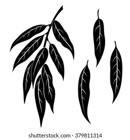 Set of Plant Pictograms, Willow Tree Leaves, Black on White. Vector