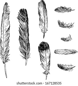 set of plumes, ink drawing, vector illustration