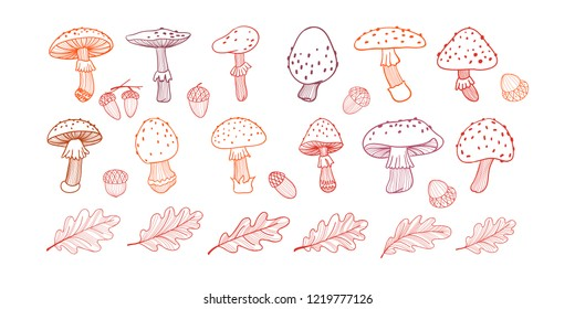 Set of poisonous mushroom, fly agarics,oak leaves and acorns. Doodle illustration. Line drawing