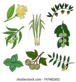 Set of popular essential oil plants. Ylang-ylang, jojoba, mint, tamanu, kukui, lemongrass, eucalyptus and neem. For cosmetics, store, spa, health care, aromatherapy, homeopathy. Template, mock-up.
