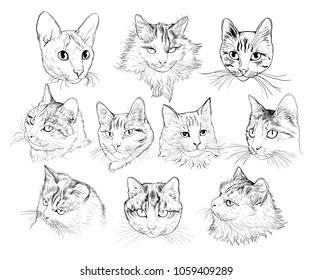 A set of portraits of different cats. Vector sketch. Hand-drawn illustration.