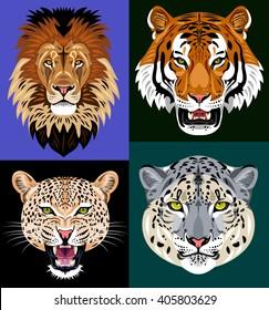 Set portraits wild predators - lion, tiger, leopard, snow leopard