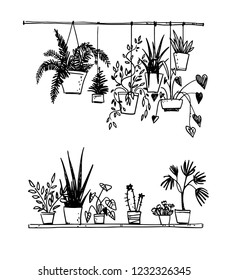 Set of potted house plants, vector sketch