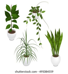 Set of potted indoor, office and house plants. Collection of 3d flower pots with plate. Isometric vector illustration