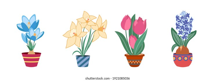 Set of potted spring bulb blossom plants. Crocus, narcissus, tulip, hyacinth. Vector illustration.
