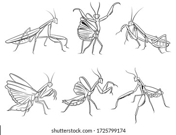Set of praying mantis. Сollection of silhouette mantis in various poses. Large predator mantis. Linear art. Vector illustration of insect on a white background.