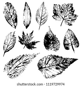 A set of prints and stamps of real leaves from trees and flowers