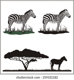 Set of profile and silhouette of zebra.