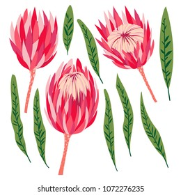 Set of protea flowers. Vector digital modern art. Bright pink, red, rose ang green colors. Bloosoms and leaves. Tropical plant. Good for clothing print, flyer, banner, poster, wedding, decor, design.