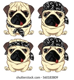 set pug in black hat