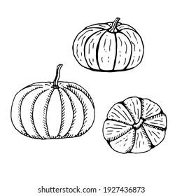 Set of pumpkin, vector illustration, hand drawing, sketch