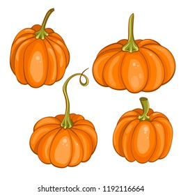 Set of pumpkins on white background. Isolated vector illustration in cartoon style.