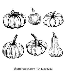 Set of pumpkins outline sketches in black ink on white background.