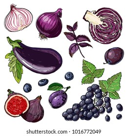 Set of purple vegetables and fruits. A vector color sketch of food on a white background. Eggplant, grapes, figs, plum, cabbage, purple onion, basil