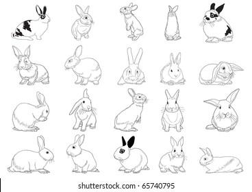 Set of rabbits isolated on white