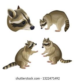Set of raccoons in different poses. Vector illustration isolated on the white background