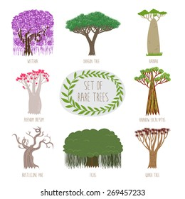 Set of rare trees in vector (Wisteria, Dragon tree, Baobab, Adenium Obesum, Ranbow Eucalyptus, Bristlecone pine, Ficus, Quiver tree).