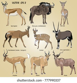 a set of  realistic African antelope - oryx, eland, hartebeest, dik-dik, impala, springbok, wildebeest, duiker, kudu, blue gnu, isolated.  Each object is located on a separate layer