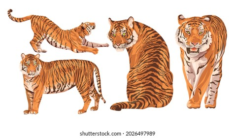 Set of realistic Amur tigers in different poses. The tiger stands, lies, walks, hunts. Animals of Asia. Panthera tigris. Big cats. Predatory mammals, an extinct animal