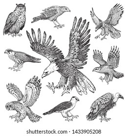 Set of realistic birds. Goshawk, Griffon vulture, Pallid harrier, Black kite, Owl and eagle. Hand drawn vector sketch in engraved graphic style.