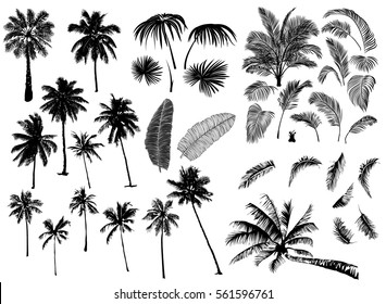 Set constructor from realistic black silhouettes isolated tropical palm trees, branch and separate banana leaves, talipot on a white background.