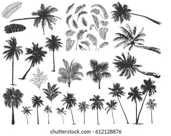 Set constructor from realistic black silhouettes isolated tropical palm trees, branch and separate banana leaves, talipot on a white background