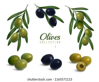 Set of realistic branches of olives with leaves, green and black glossy fruits isolated vector illustration