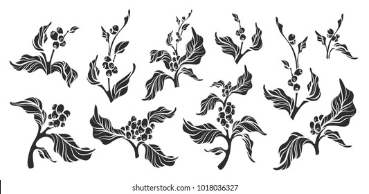 Set of realistic coffee branch with leaves and natural coffee bean Botanical shape drawing design Nature plant Eco food Organic drink Black silhouette illustration isolated on white background Eps10