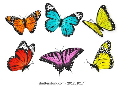 Set of realistic colorful butterflies, butterfly vector illustration
